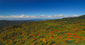 北海道東川町の秋の旭岳